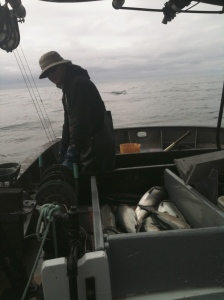 Greg catching coho
